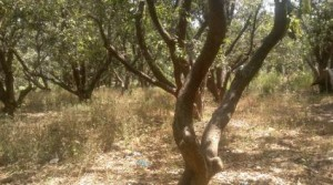 Plot-available-in-malibad-for-sale-1534922025-1400863913
