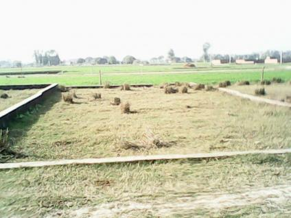 1130 Sqft Plots For Sale In Royal Heights At Faizabad Road