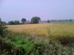 fresh-plots-are-available-at-raibarely-road-in-prime-location-1176439855-1398936305
